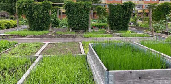 Grönska i odlingslådor.