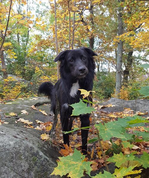 Hund i skog