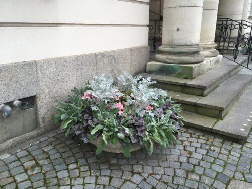 Höstblommor utanför Rådhuset