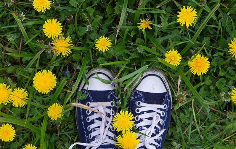 Gräsmatta med maskrosor och ett par fötter med sneakers skor.