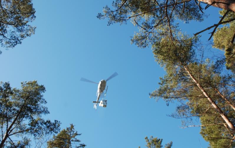 En flygande helikopter och trädtoppar sett underifrån.